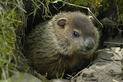 Groundhogs and Grant Experts Predict What's Ahead in 2011